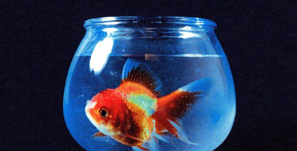 Stream Vince Staples' New Big Fish Theory Album